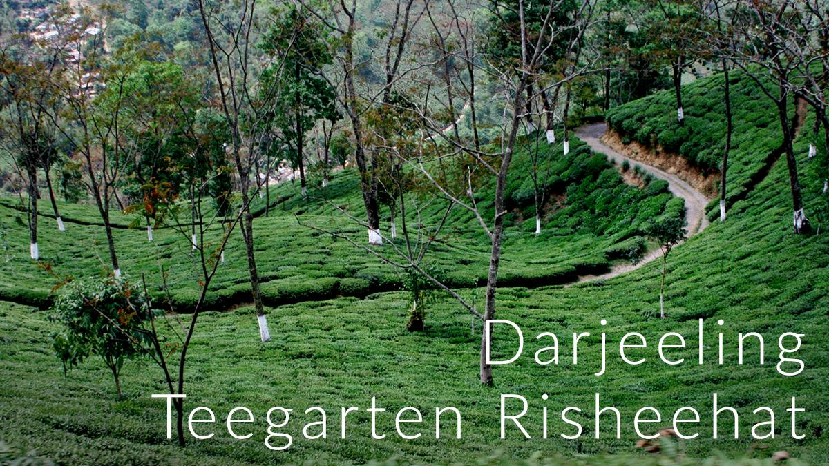 DarjeelingRisheehat