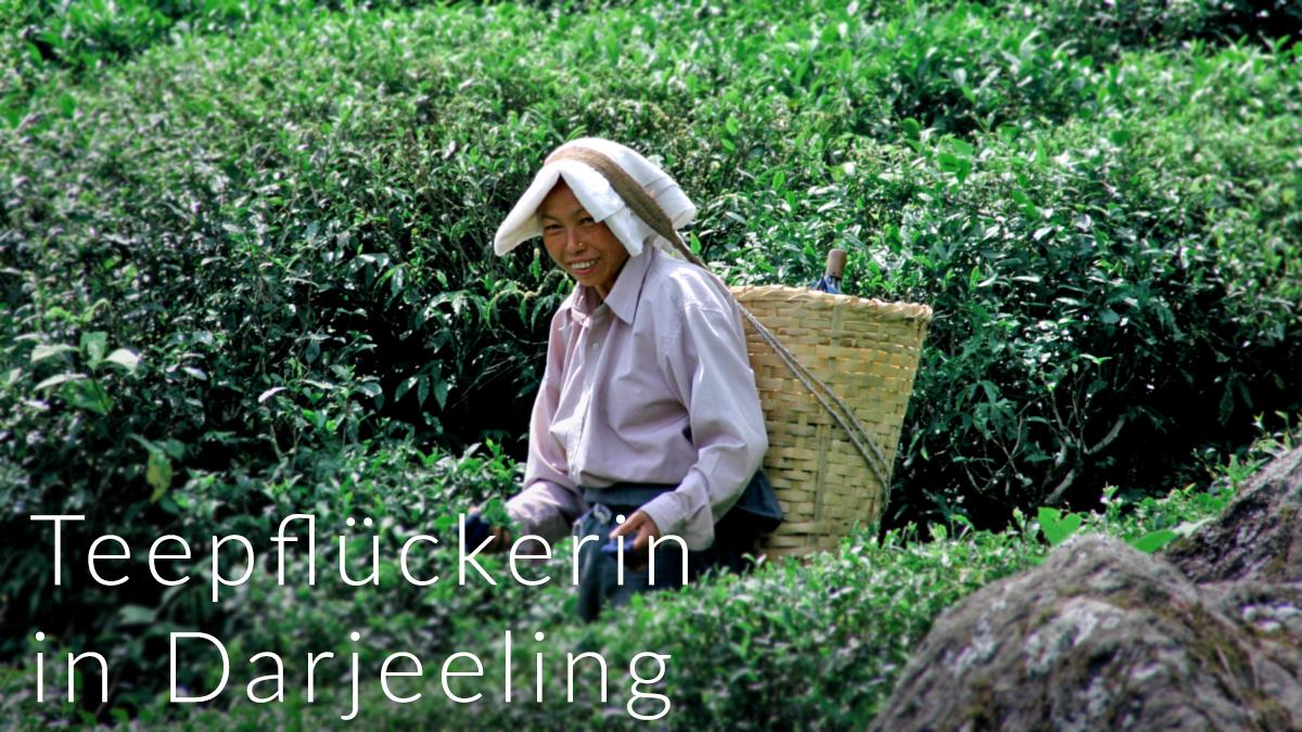 DarjeelingPflueckerin