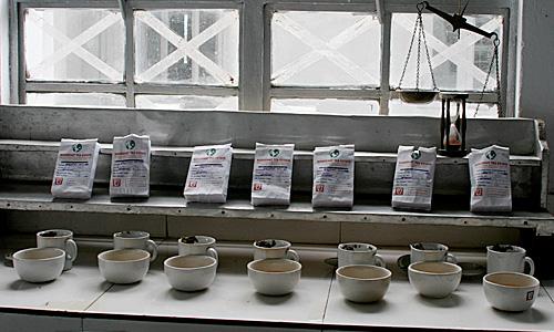 TeeverkostungDarjeeling