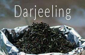 Darjeelingtee