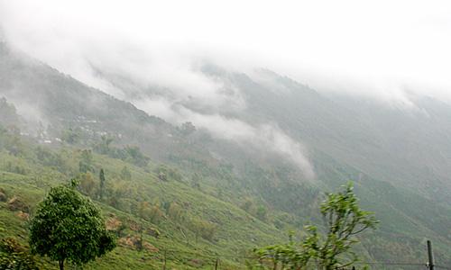 cloudsinteagardenDarjeeling