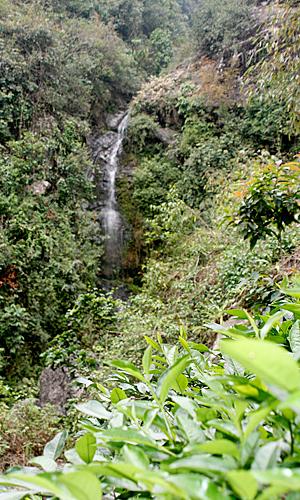 WasserfallDarjeeling